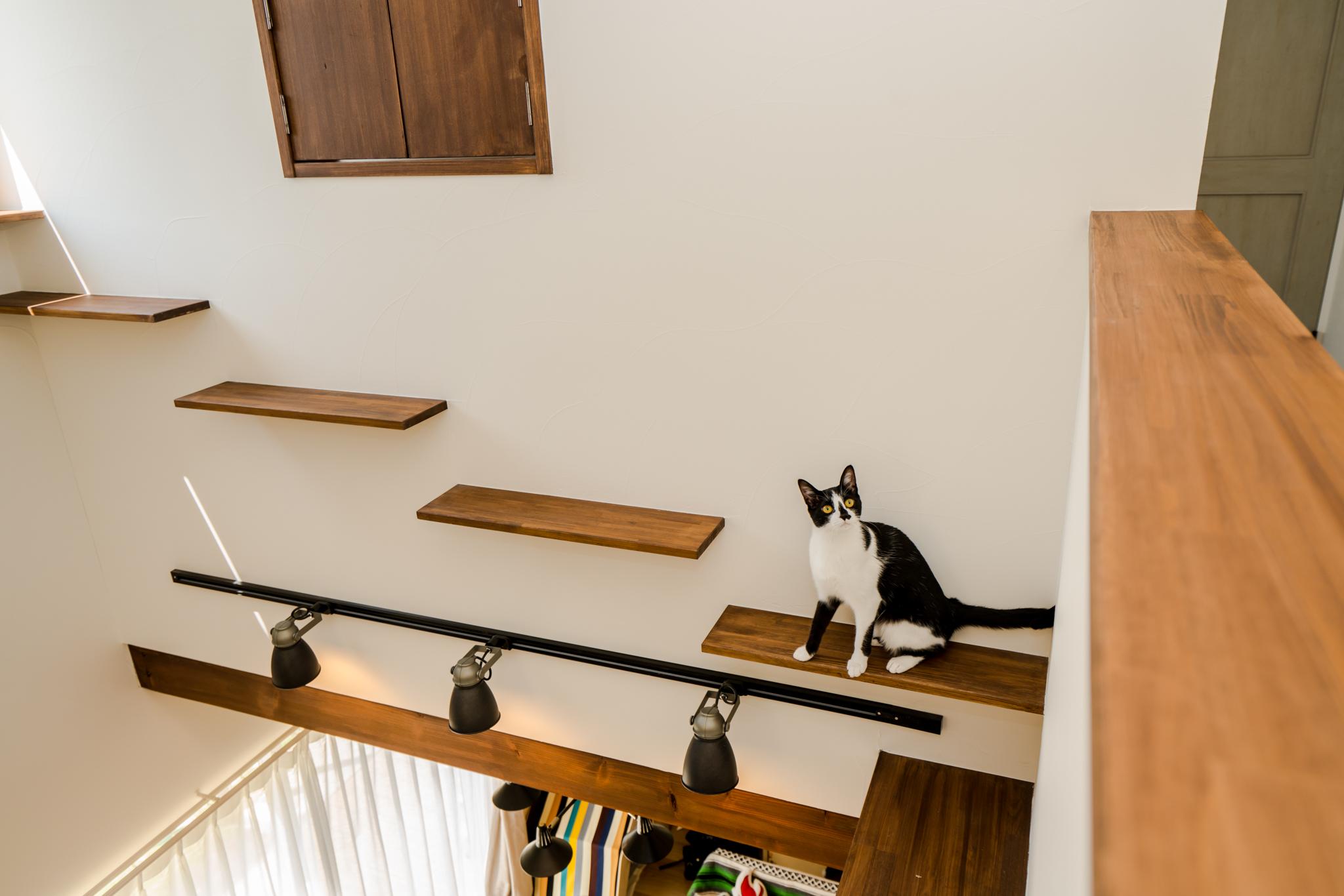 大好きなペットと暮らすキャットウォークのある家の内装