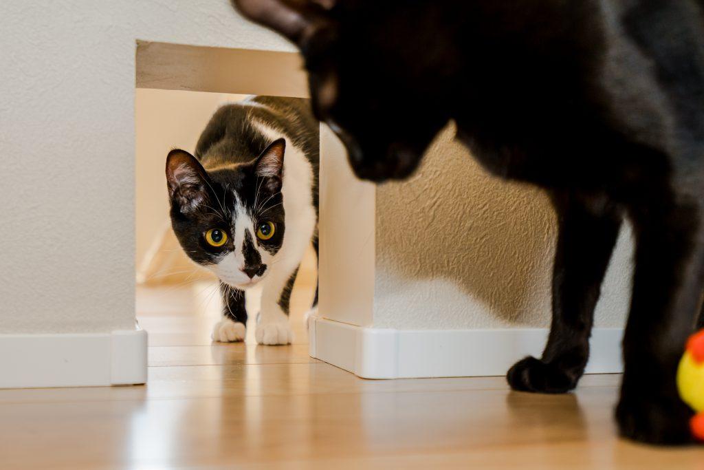 壁に猫専用の通路穴を設置