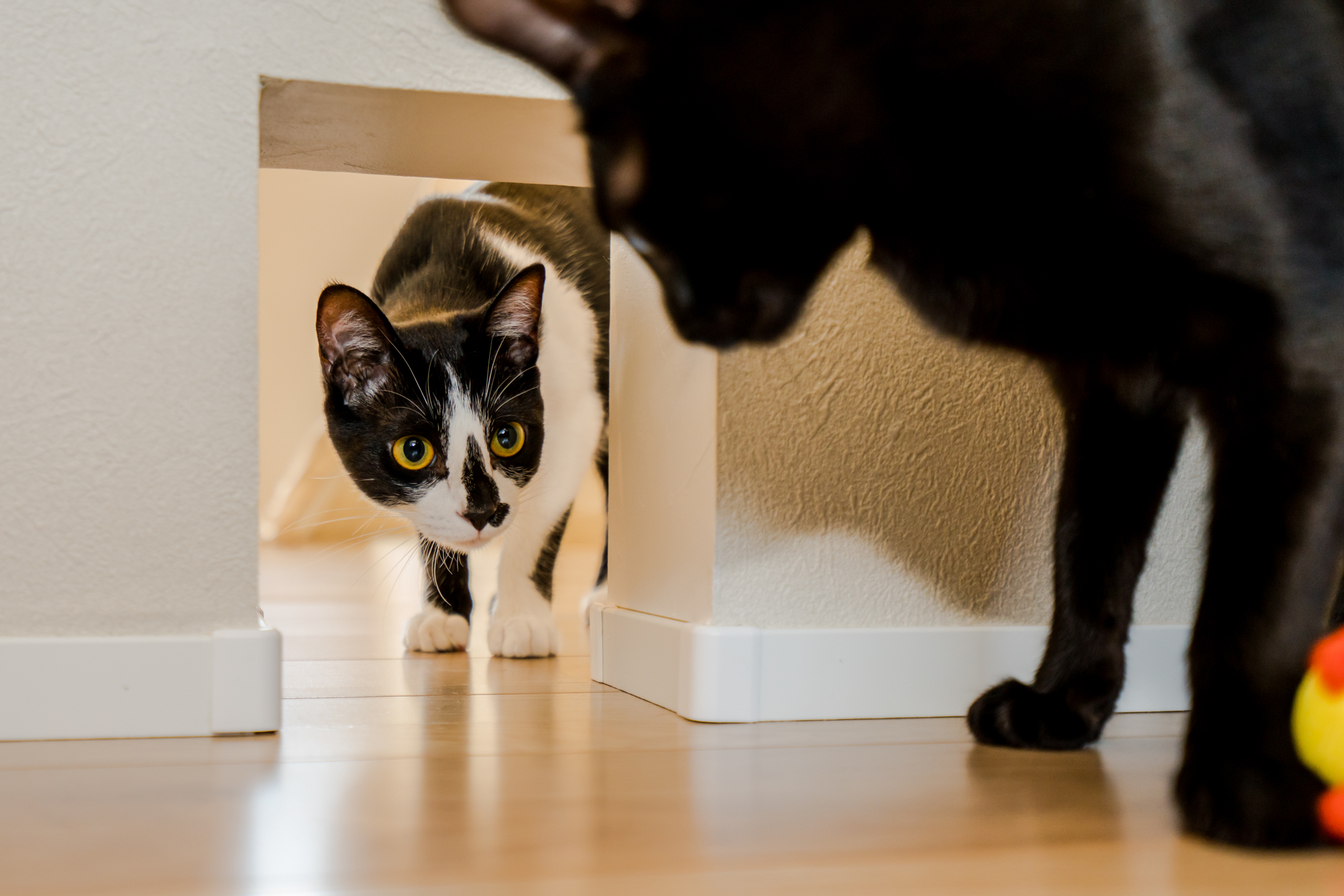 猫と暮らす家ならではの工夫 猫の通り道を確保。猫ドアの設置も可能です!