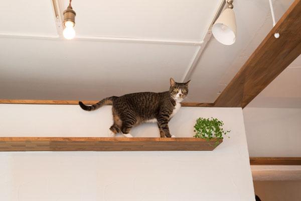 猫と暮らす家の間取りアイデア